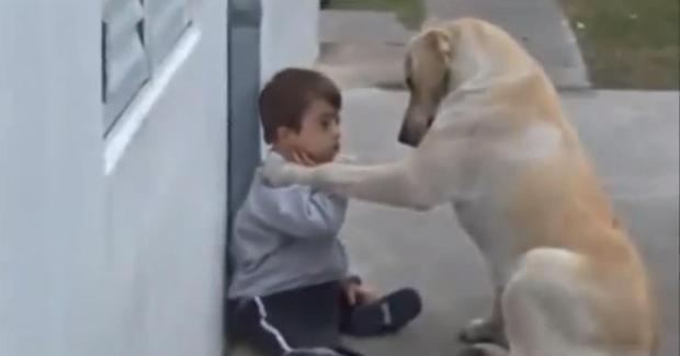 cão e menino